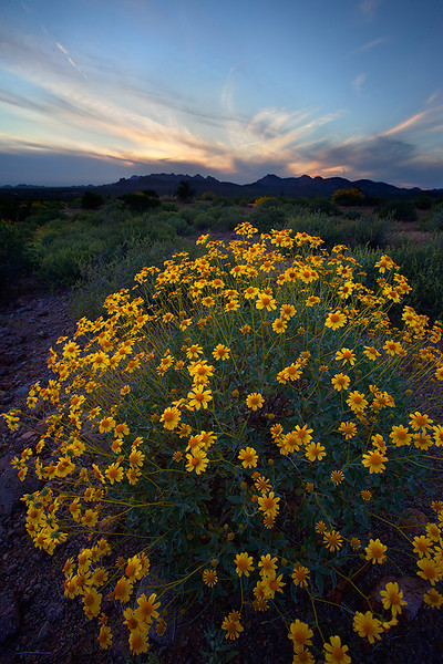 """""""Desert bouquet""""<br /> <br /> Spring coming to an end in the desert."""