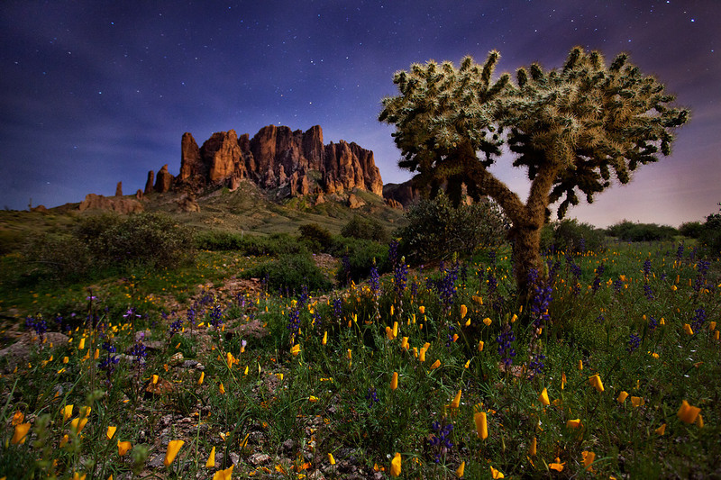 """Colorful Night""<br /> <br /> Wildflowers at Lost Dutchman on a starry night."