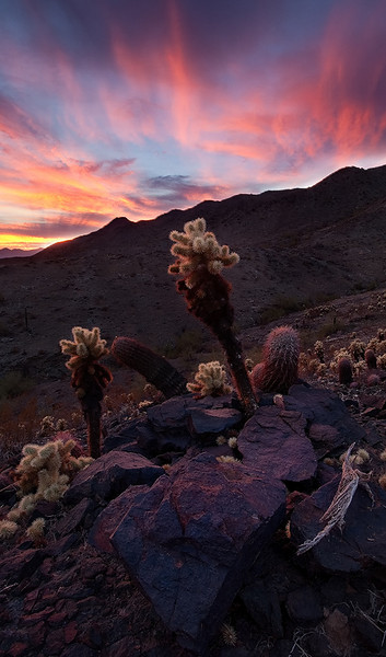 """Chollas last light""<br /> <br /> A fiery sunset over South mountain park."