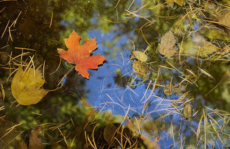 """Reflecting autumn""<br /> <br /> Fall colors and some clear sky reflected on a small pool at Mt.Lemmon."