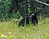 Black Bear #2, Many Glaciers area