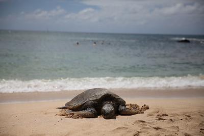 Hawaii June 2013