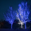 Illumination; Tree Lights at Morton Arboretum