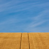 Wheat Field with Tire Tracks