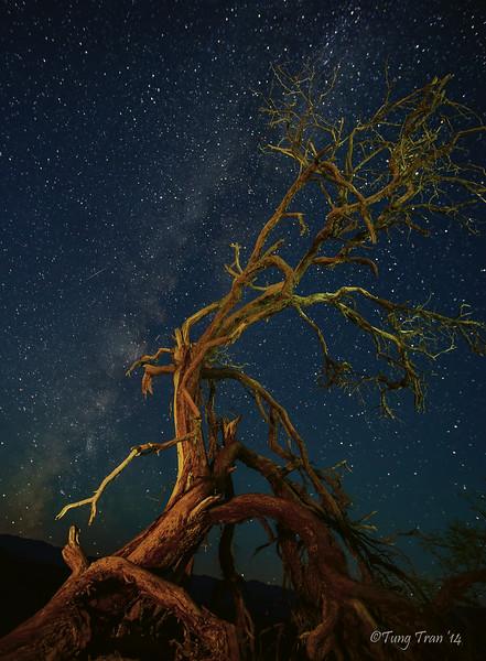 Starry Night Dance