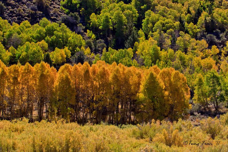 Fall Colors, June Lake Loop, California
