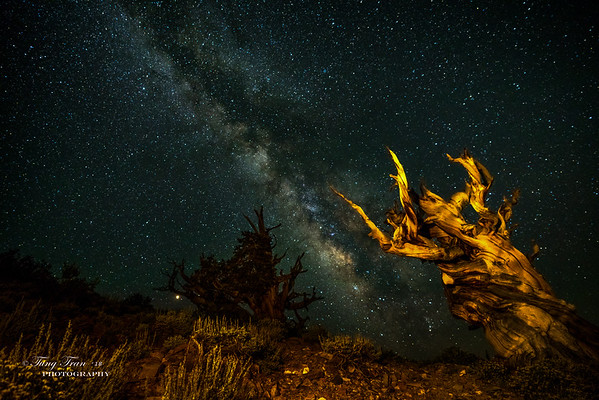 White Mountain StarTrail and Milkyway