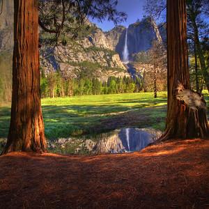 In Between the Redwood Trees