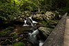 Anna Ruby Falls Trail 2
