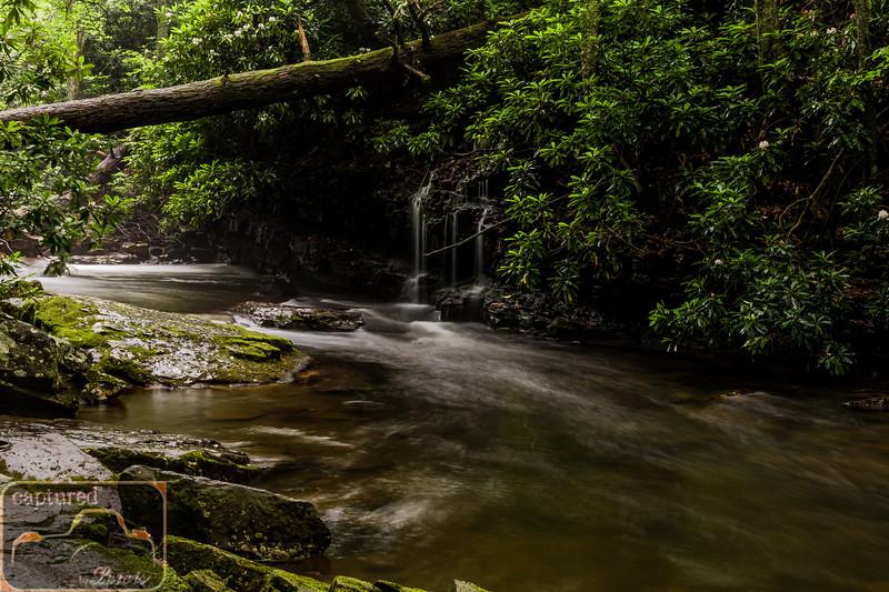 Cascade Falls Trail 6