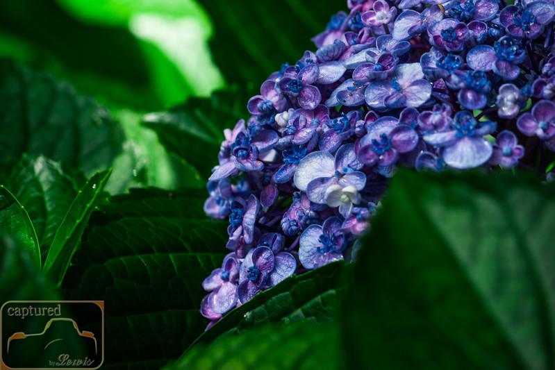 Hampton Park Flower