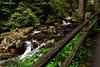 Anna Ruby Falls Trail 3