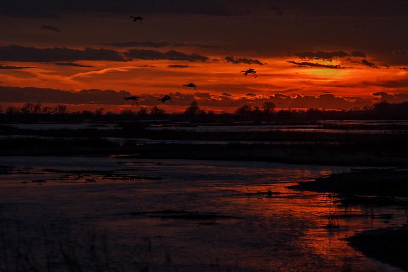 Golden Sunset in Kearney