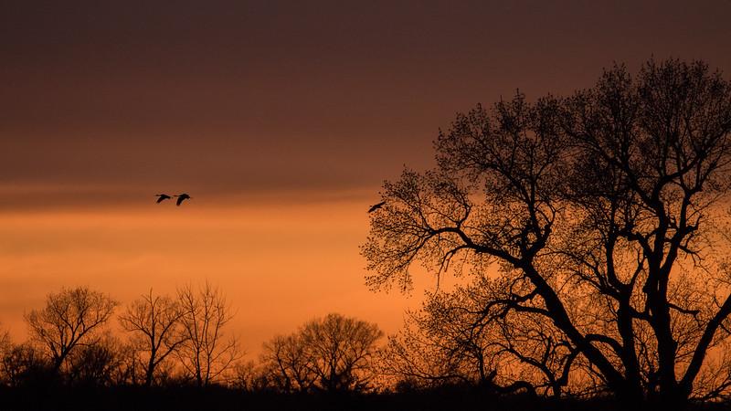 Cranes Going Home