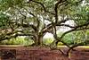 The Tree of Life, Audubon Park