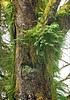Moss and Fern covered Tree