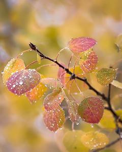 Fall n Rain Drops