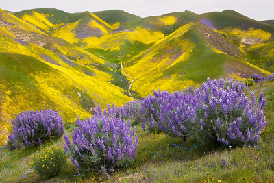Serene Beauty