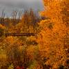 Autumn in Bear Creek