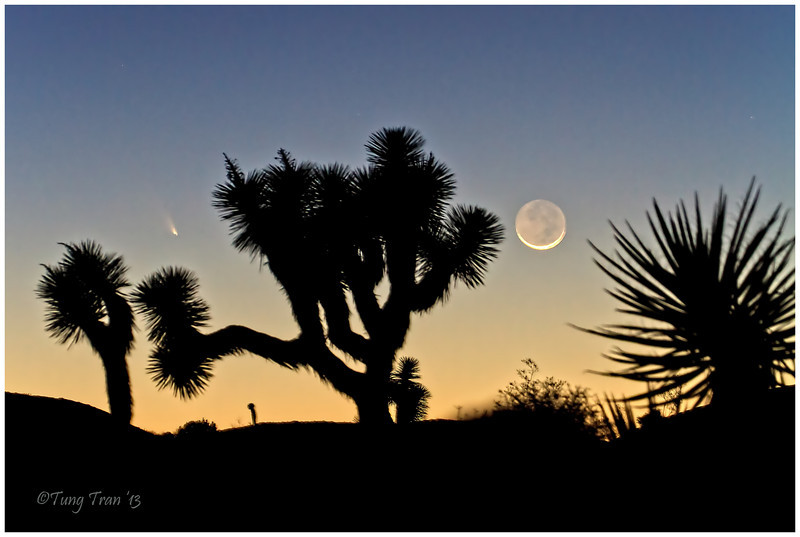Pan-STARRS (C/2011 L4). The comet was on the left hand side of the Joshua Tree. Photographed 3/12/2013.