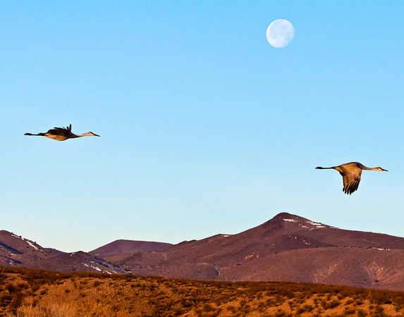 Flying By The Rising Moon