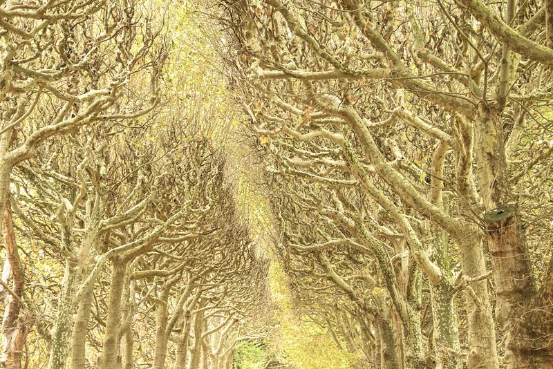 Walk in the Woods, Paris