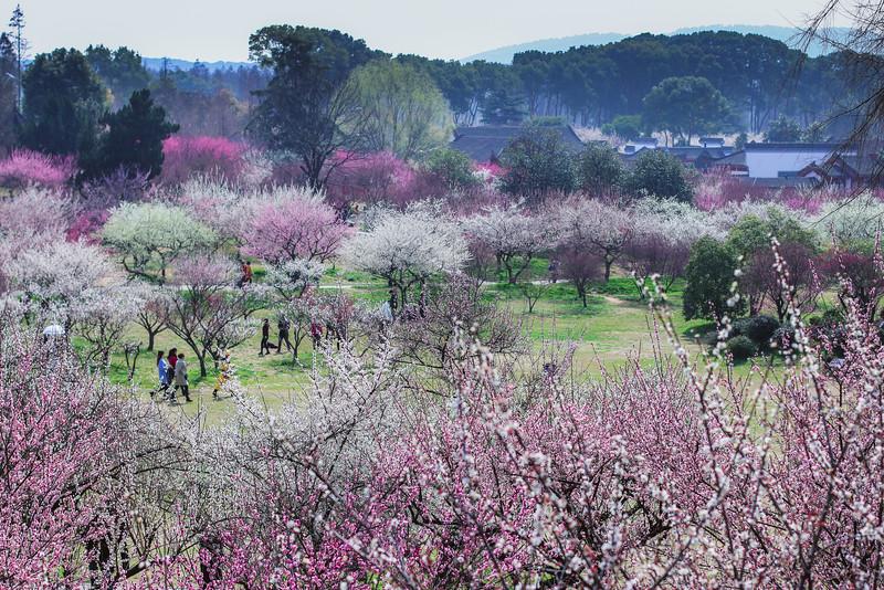 East Lake Cherry Blossom Park