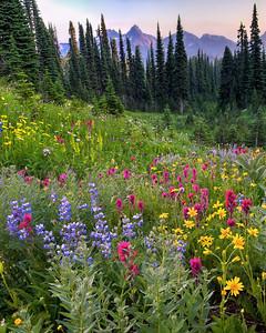 Enchanting Prairie