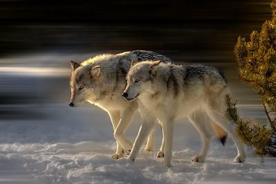 Wild Companions
