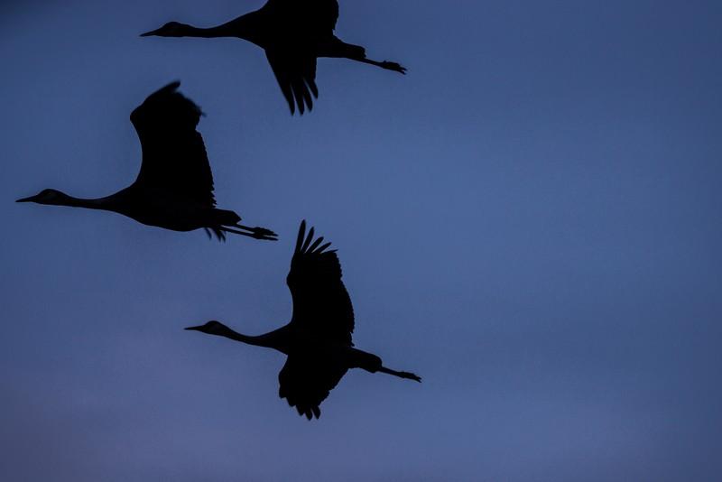 Cranes Family