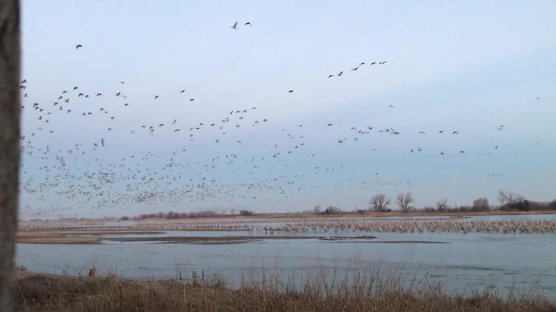 Morning Rush Hour in Kearney, Nebraska