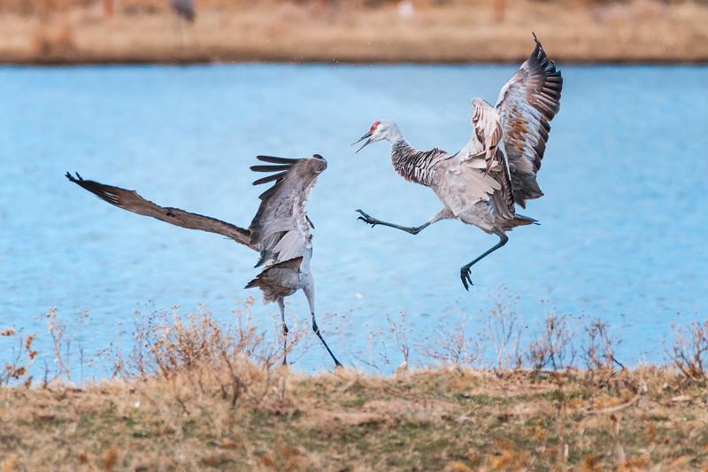 Kung Fu Cranes