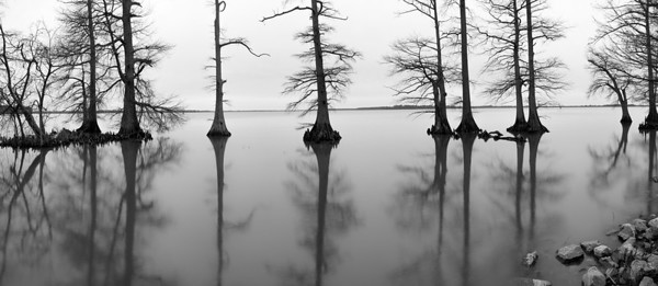 Reelfoot Panorama This one can easily be printed up to 3 feet wide.  More with some additional processing.