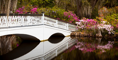 Magnolia Plantation Bridge and Azaleas