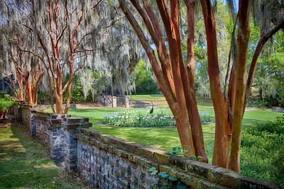 Tree Lined Wall