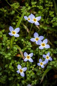 Bluettes