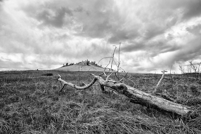 Dead Tree at the Buttes