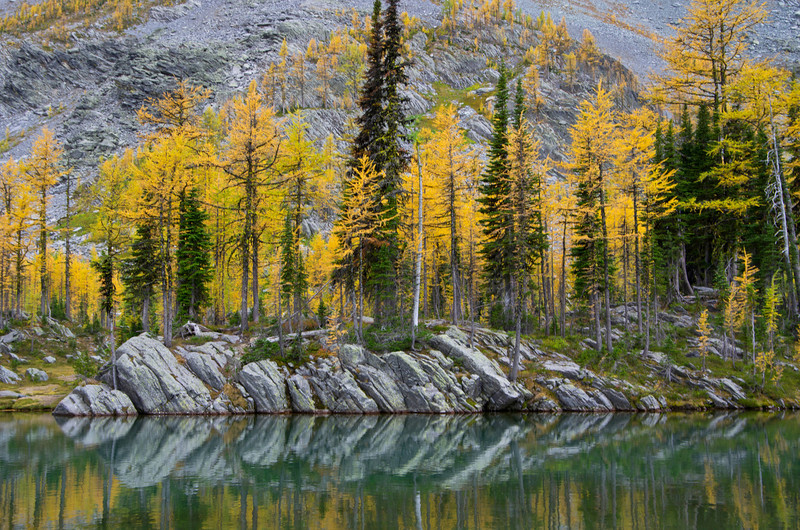 Fall Larch at Tanglefoot Basin