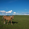 On The Wycliffe Prairie