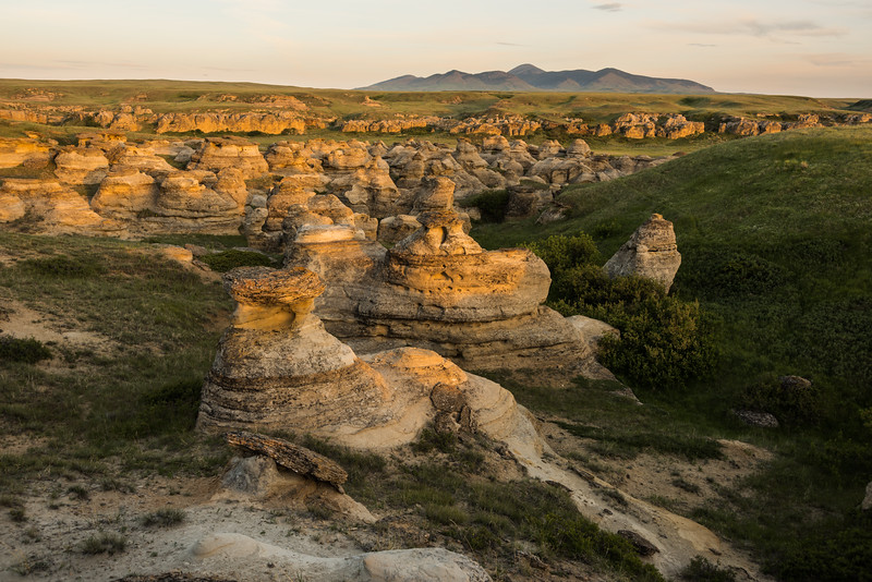 Late afternoon light at Writing on Stone Provincial Park