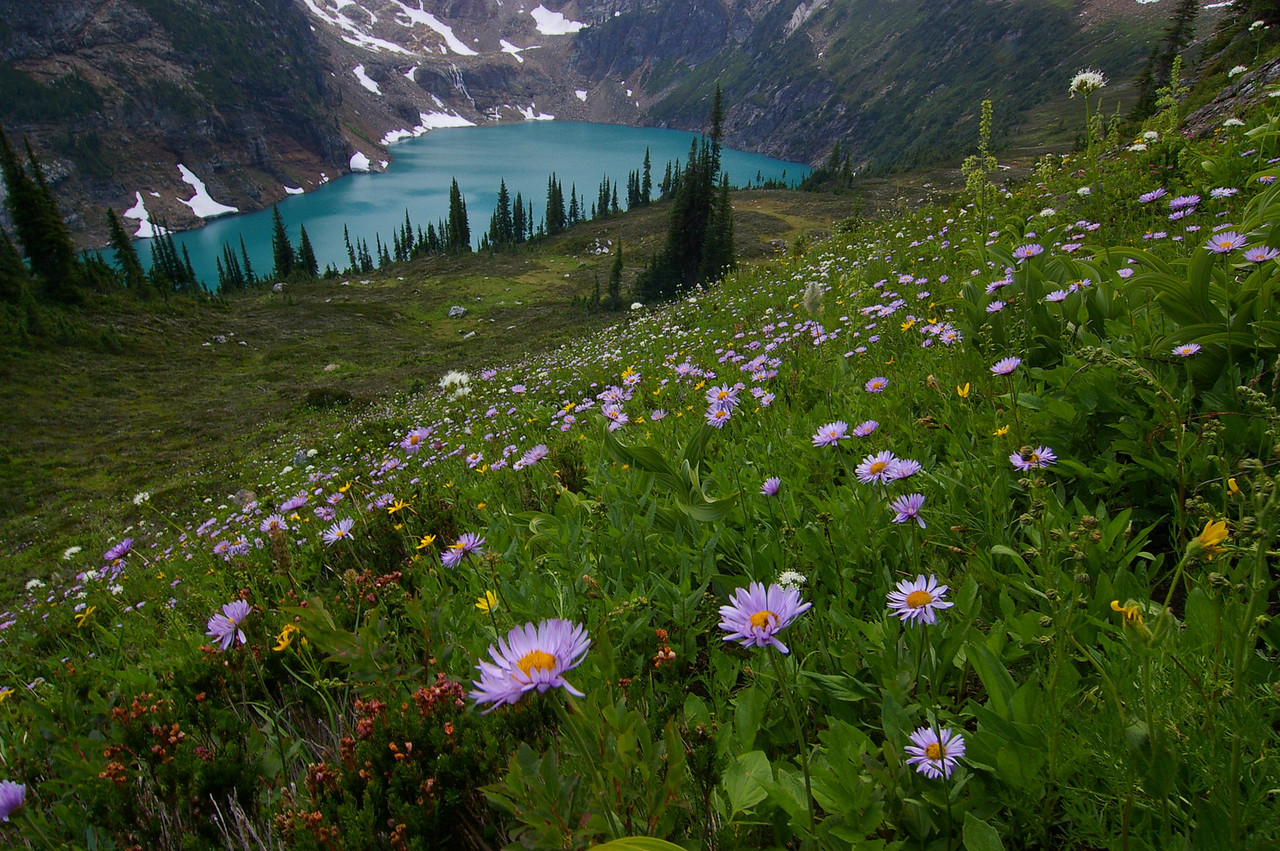 Wildflowers and Alpine Lake