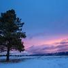 Lone Pine at Sunrise