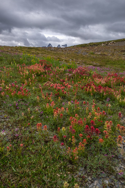 Wildflowers and the Vowell Group of Peaks