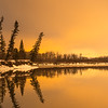Leaning Trees along the Kootenay River