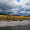 Fall Colour along the Flathead River