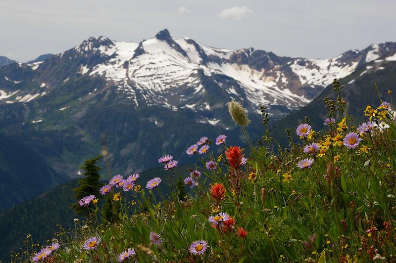 Monashee Wildflowers