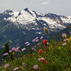 Monashee Wildflowers