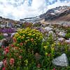 Thunderwater Lake Wildflowers