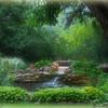 May Pond 2012