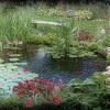 July Pond 2012